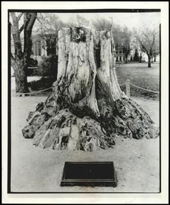 Project Two Ada Tree 1940.jpeg