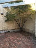 20151015_Irving_courtyard02_Savage.JPG